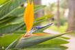 canvas print picture - fleur oiseau de paradis