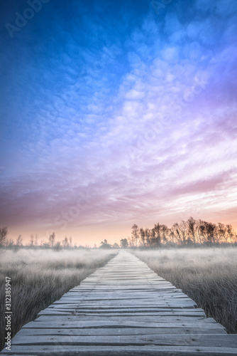 Fototapety, obrazy: Golden hour in Limburg. Wooden pathway through national park de groote peel on the border between Limburg and North Brabant in the Netherlands. Winter landscape.