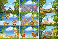 Set Of Various Animals In Natu...