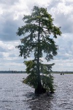 Solitary Trees In The Lake At ...