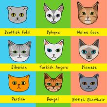Nine Cat Breeds In Cute Cartoo...