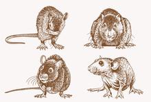 Vintage Set Of Rats , Graphical Vector Illustration