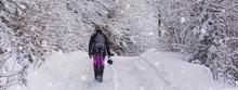 Winter Landscape, Banner - Vie...