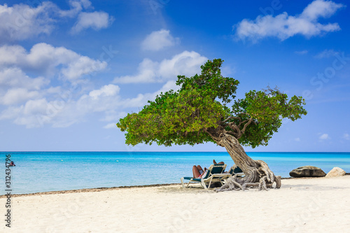 фотография Aruba, Netherlands Antilles. Divi divi tree on the beach.