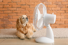 Cute Dog And Electric Fan Near...