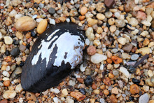 Shell Surrounded By Pebbles