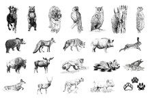 Set Of Many Animals And Foot P...
