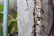 canvas print picture - Old and broken concrete pillar exposed to gravels and steel bar and green PVC pipe