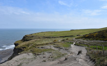 Sea Cliff Walk With A Pasture With Cows In England