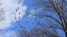 Birds Flying Over Branches Of ...