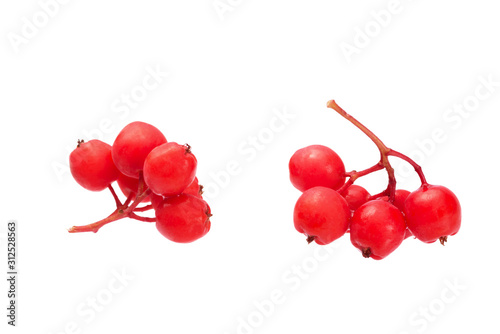 bright rowan berries isolate on white Canvas Print