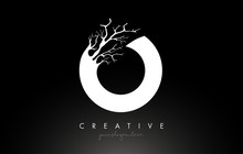 Letter O Design Logo With Creative Tree Branch. O Letter Tree Icon Logo