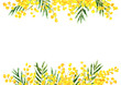 Leinwanddruck Bild - Mimosa yellow spring  flower border and frame. Watercolor hand drawn illustration isolated on white background