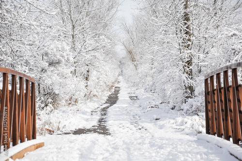 Cuadros en Lienzo Bridge in the snowy trail