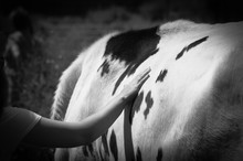 A Black And White Image Of A Woman Touching A Cow