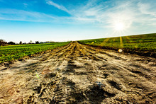 Dirt Road For Agriculture