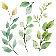 Leaves Watercolor Set. Hand Pa...