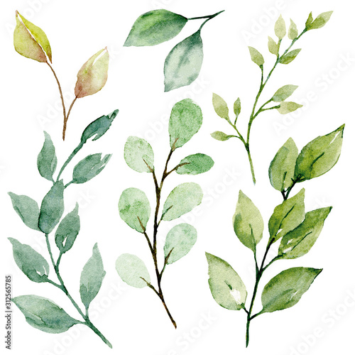 Obraz Leaves watercolor set. Hand painting floral illustration. Green leaf, plants, foliage, branches isolated on white background.  - fototapety do salonu