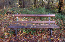 Bench With Pipes In The Forest