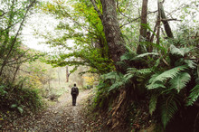 Man Walking In Jungle With Lus...