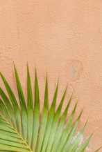 Detail Of A Palm Leaf With A Orange Wall In The Background