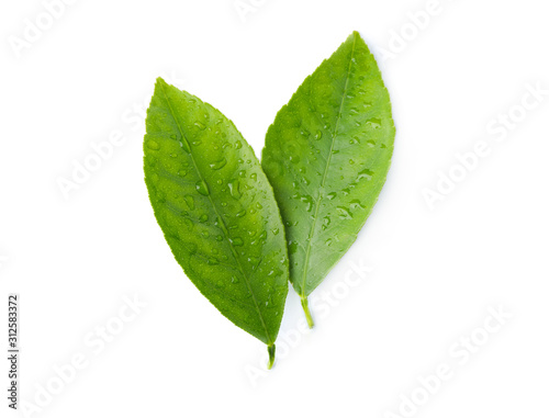 Cuadros en Lienzo  Fresh green citrus leaves with water drops isolated on white, top view