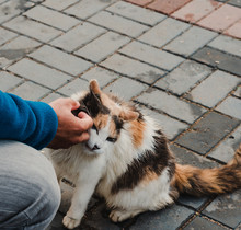 Gato Callejero Tricolor Mojado Acariciado Por Una Chico Joven