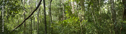 Biodiversity in a dense tropical forest Canvas Print