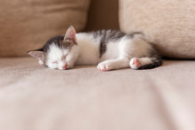 Kitten Sleeping On The Couch