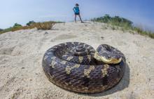 Snake On The Beach