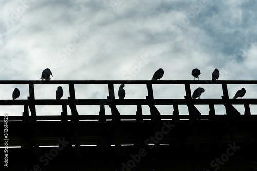 Obraz silhouette of bunch of seagulls resting on top of a wooden building near the dock on a cloudy day - fototapety do salonu