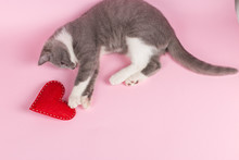 Grey Kitten Plays With Red Heart On A Pink Background. The Concept Of A Valentine's Day Card.