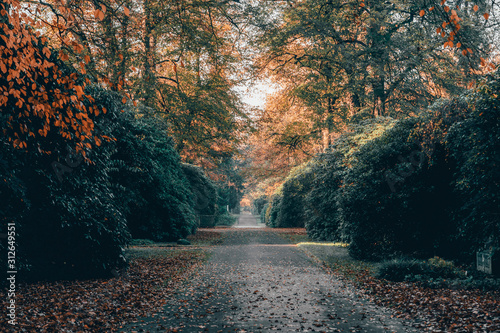 Yellow leaves alley pathway in Ohlsdorf Cemetery during fall in Hamburg city, Ge Wallpaper Mural