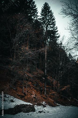 Obraz na plátně The witcher forest