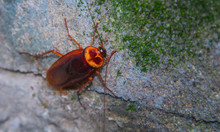 Cockroach On The Stone Wall