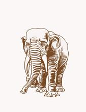 Graphical  Vintage Elephant, V...