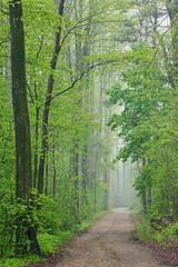 Fototapeta Inspiracje na wiosnę Trail through foggy spring woodland, Kellogg Forest, Michigan, USA