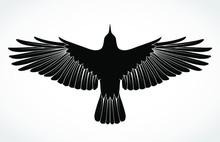 Crow Silhouette Illustration