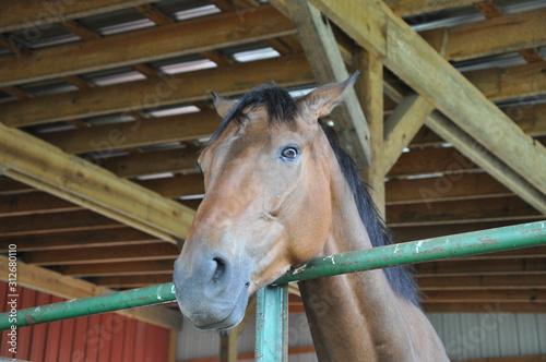 horse in his pen