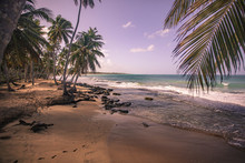 Playa Limon In Dominican Repub...