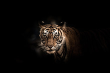 Fine Art Image Of Ranthambore ...