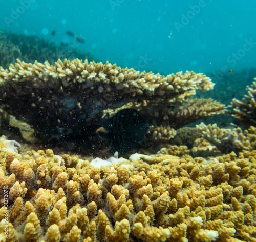 Coral Reef Ecosystem In Cloudy Water, Captured By Underwater Snorkeler