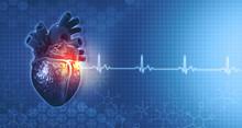 Anatomy Of Human Heart On Ecg ...