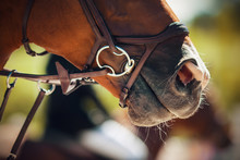 The Muzzle Of A Bay Horse Wear...