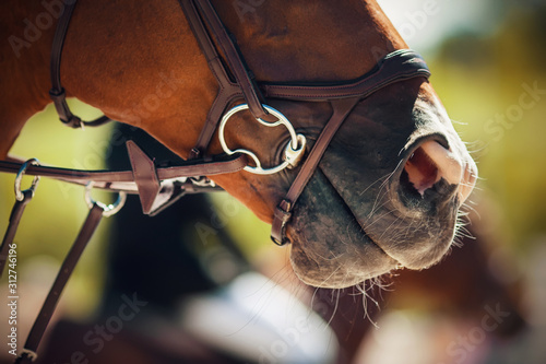 The muzzle of a Bay horse wearing a bridle with a snaffle, illuminated by sunlight on a summer day, and behind another rider sitting on a horse Fototapeta