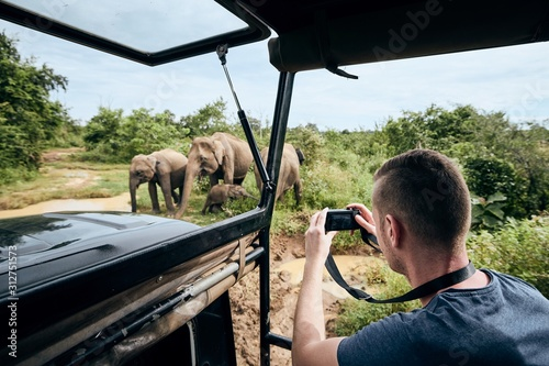 Fototapeta Photographing of group of elephants obraz