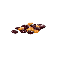 Dried Raisins Isolated Berries Of Grapes Sketch. Vector Sugared Fruit Dessert