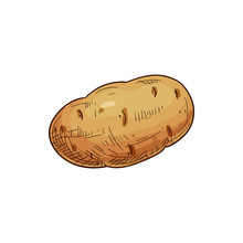 Young Or Old Potato Isolated V...