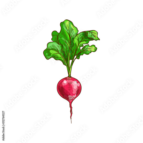 Photo Root radish vegetable with green leaves isolated