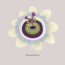 Passionflower Is A Grassy Lian...